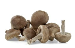 A bunch of shiitake mushrooms are isolated on white background royalty free stock image