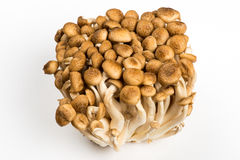 Bunch of Shimeji Mushrooms on white. Background Royalty Free Stock Image