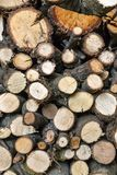 Pile of cut trees  Stock Photos