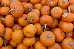 Bunch of small orange pumpkins Royalty Free Stock Photo