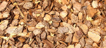 A bunch of small pieces of bark. On the ground Royalty Free Stock Photography