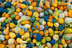 Bunch of small pumpkins Stock Photography
