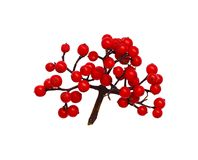 Bunch of small red berries. Isolated on white stock photo