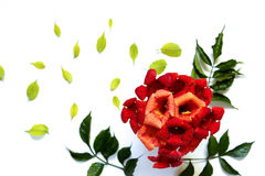 Bunch of small red flowers with green leaves on a white background. Simple cute pattern in small-scale red flowerswith green leaves on a white background . view Stock Images