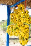 Bunch of small yellow bananas for sale Royalty Free Stock Image