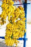 Bunch of small yellow bananas for sale Stock Photos