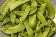 Bunch of snow peas. Washed bunch of snow peas Stock Images
