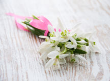 Bunch of snowdrop flowers Stock Images