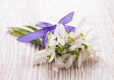 Bunch of snowdrop flowers Stock Photography