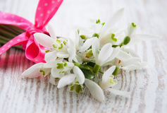 Bunch of snowdrop flowers Royalty Free Stock Images