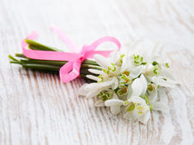 Bunch of snowdrop flowers Royalty Free Stock Photography