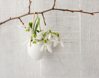 Bunch of snowdrops in egg shell Royalty Free Stock Photos