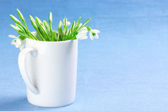 Bunch of snowdrops Royalty Free Stock Image