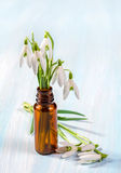 Bunch of snowdrops Royalty Free Stock Photo