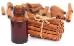 Bunch of some fresh aromatic cinnamon with essential oil. In a bottle Royalty Free Stock Image