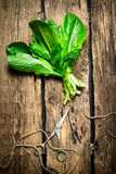 Bunch of sorrel with scissors. On a wooden table Royalty Free Stock Images
