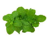 A bunch of spearmint Royalty Free Stock Image