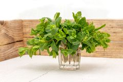 Bunch of spearmint mentha spicata synonym Mentha viridis also known as garden lamb and mackerel mint in a glas filled with water stock images