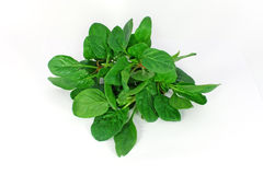 Bunch of spinach Stock Images