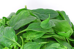Bunch of spinach Royalty Free Stock Images