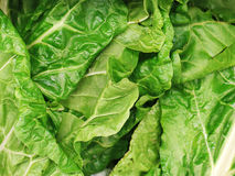 Bunch of Spinach Stock Photography