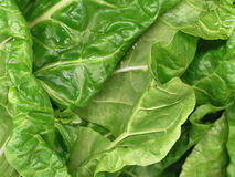 Bunch of Spinach Royalty Free Stock Image