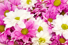 Bunch of spring flowers Royalty Free Stock Photos