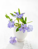 Bunch of spring flowers Vinca in eggshell on the white wooden plank. royalty free stock images