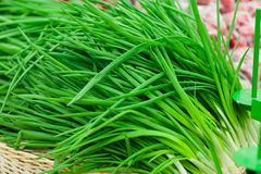 Bunch of spring onions Royalty Free Stock Image