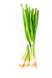 A bunch of spring onions Royalty Free Stock Image