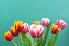 Bunch of spring tulip flower stock image