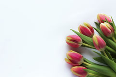 Bunch of spring tulips. Tulips on white background; high angle view Stock Images
