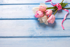 Bunch from spring white and pink tulips on  blue wooden backgrou Stock Photos