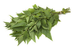 Bunch of stinging  nettles Stock Image