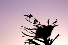 Bunch of storks Royalty Free Stock Photos