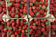 Bunch of Strawberries Stock Image
