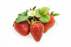 Bunch of strawberries with leaves and flower Stock Image