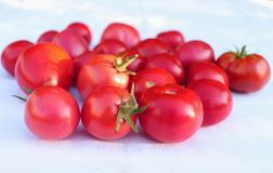 Bunch of succulent ripe fresh red tomatoes on a white cotton cloth in organic garden, with blurred background. Healthy raw food in. Bunch of succulent ripe fresh Stock Images