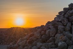 A bunch of sugar beets at sunset. the lights of a sun.  royalty free stock images