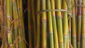 Sugar cane juice. Bunch of sugar cane stalks