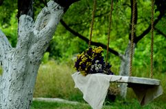 A swing. resting-place. photo area royalty free stock image