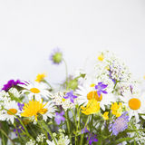 Bunch of summer wild meadow floweres Royalty Free Stock Image
