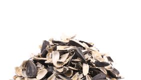 Bunch of sunflower seeds pile. Stock Photography
