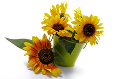 Bunch of Sunflowers Stock Images