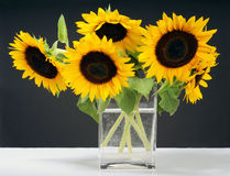 Bunch of sunflowers Royalty Free Stock Photos