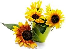 Bunch of Sunflowers Stock Photo