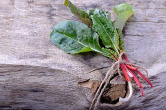 Bunch of swiss chard Royalty Free Stock Image