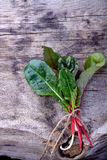 Bunch of swiss chard Royalty Free Stock Photography