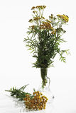 Bunch of Tansy in vase Royalty Free Stock Image