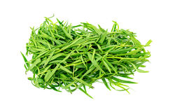 Bunch of tarragon herb leaves isolated on white Stock Image